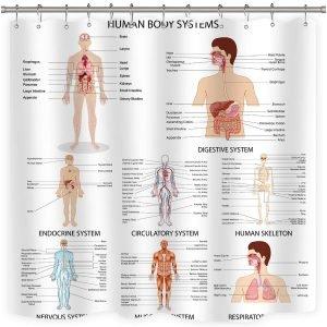 Human Organ Shower Curtain